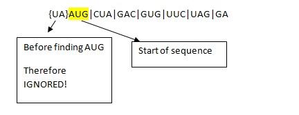 Amino Acid Sequence 04   Pediaa.com