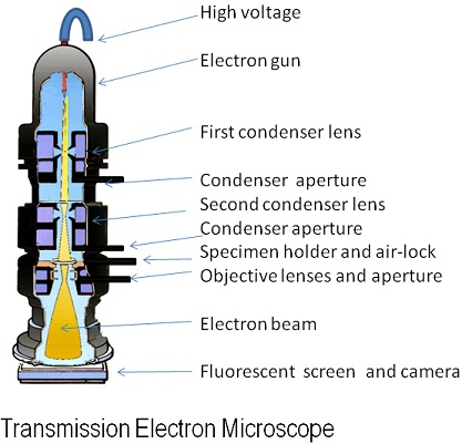 Difference Between Light Microscope and Electron Microscope - TEM