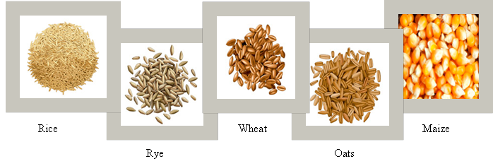 Difference Between Cereals and Pulses -cereal examples