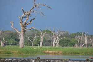 What are the Places to Visit in Sri Lanka_2