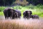 Wildlife in Sri Lanka1
