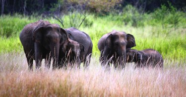 Wildlife in Sri Lanka1