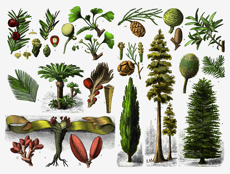 Difference Between Angiosperm and Gymnosperm