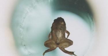 Difference Between Diamagnetism, Paramagnetism, and Ferromagnetism - Levitating_frog