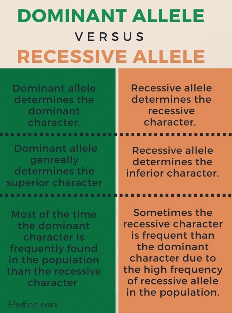 Difference Between Dominant and Recessive Alleles - infographic