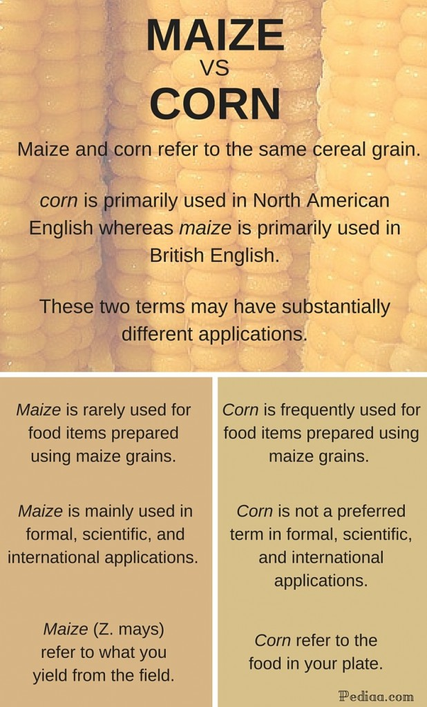 Main difference - Maize vs. Corn