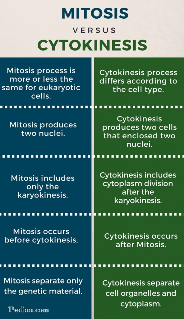 Difference Between Mitosis and Cytokinesis - infographic