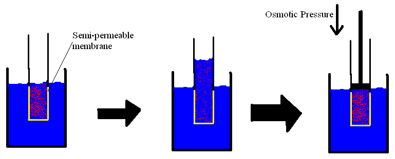 explain the relationship between solute concentration and osmotic pressure Get an answer for 'what is the difference between water potential and osmotic  solute concentration to higher solute concentration osmotic potential .