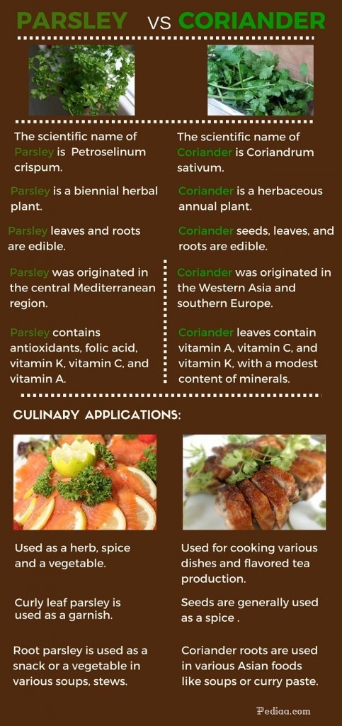 Difference Between Parsley and Coriander - infographic