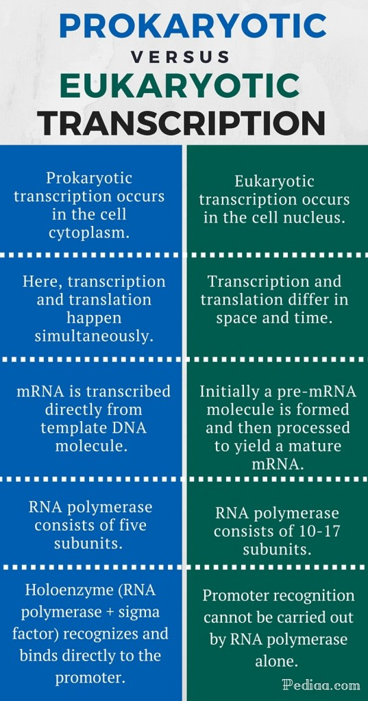 Difference Between Prokaryotic and Eukaryotic Transcription - infographic 1