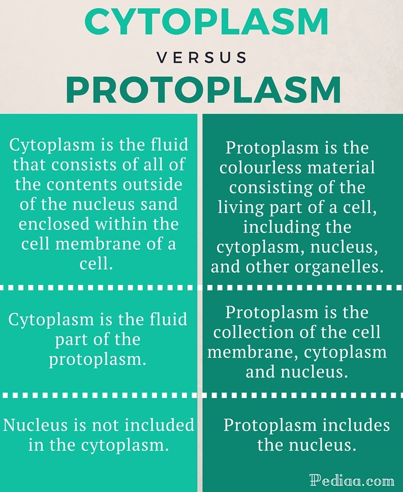 Difference Between cytoplasm and protoplasm - infographic