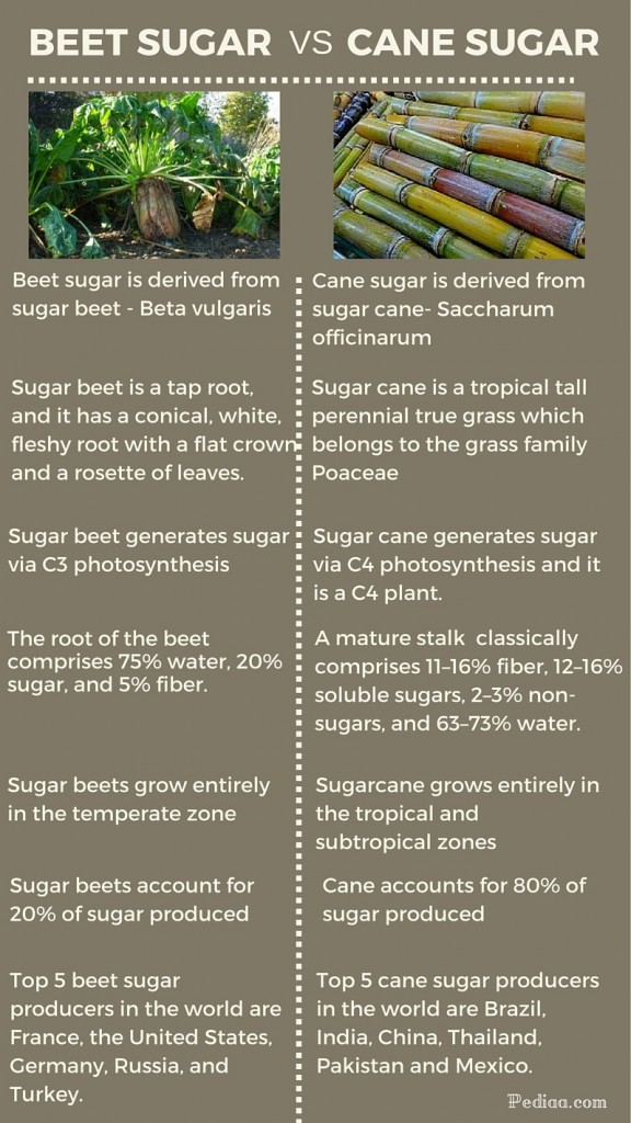 Difference between Beet Sugar and Cane Sugar -infographic