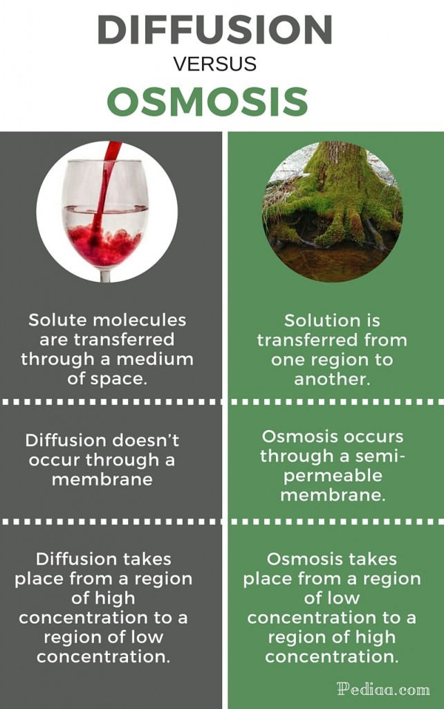 Difference between Diffusion and Osmosis - infographic