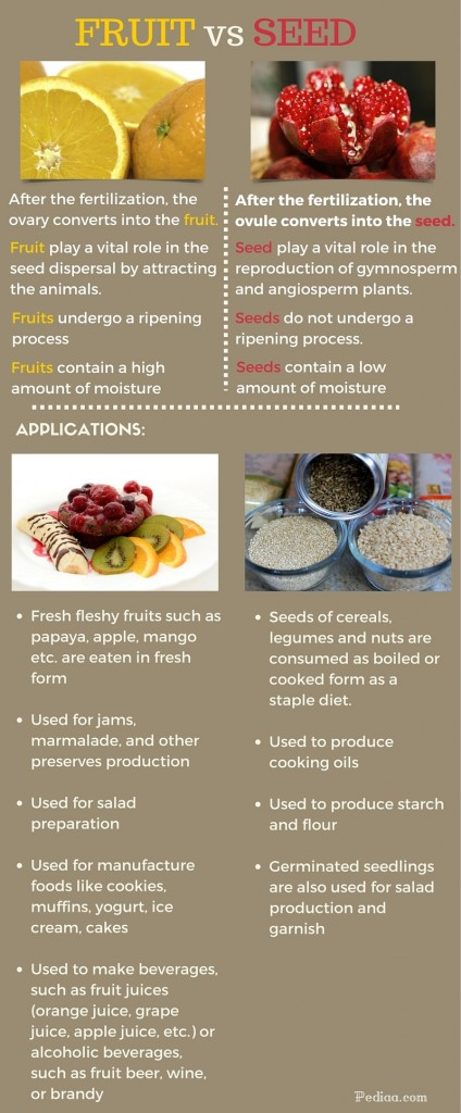 Difference between fruit and seeds- infographic