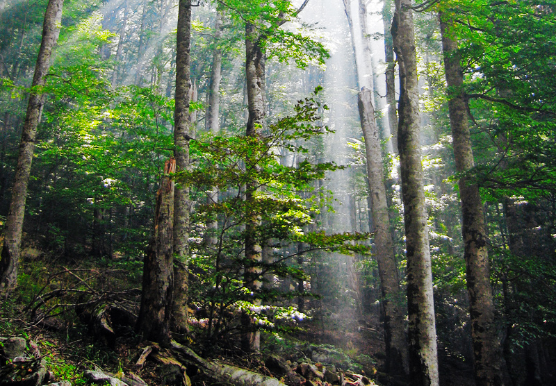 A description of the forest dilemma on protecting the worlds forests