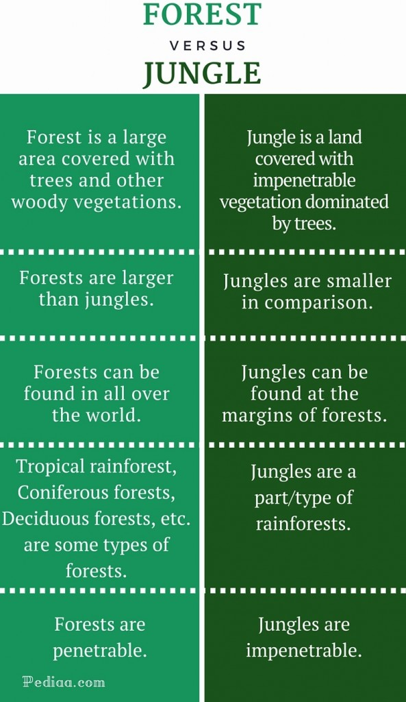 Difference Between Forest and Jungle - infographic