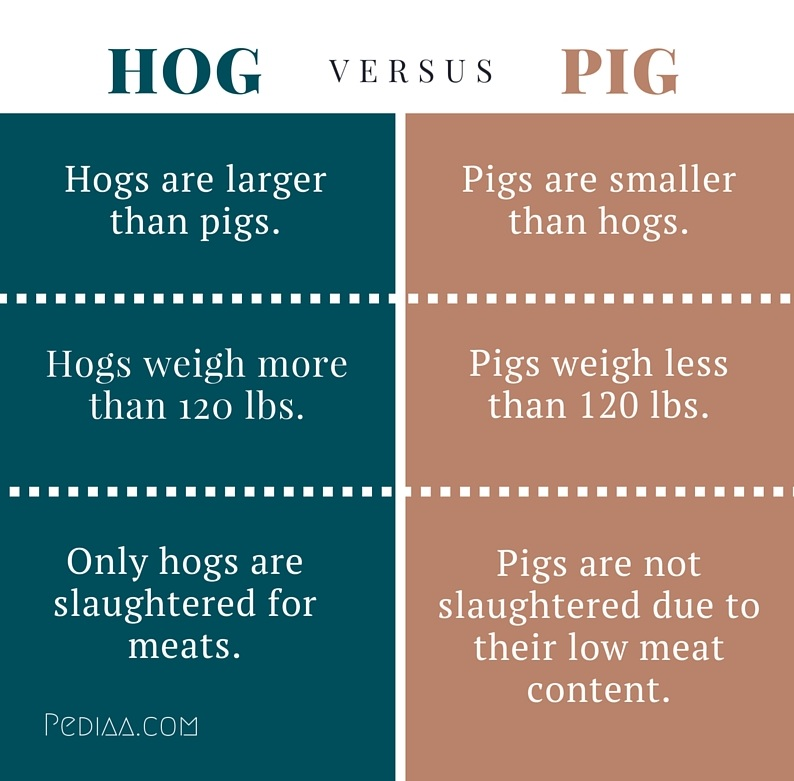 hog and pig difference