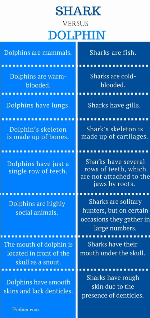 Difference Between Shark and Dolphin - infographic