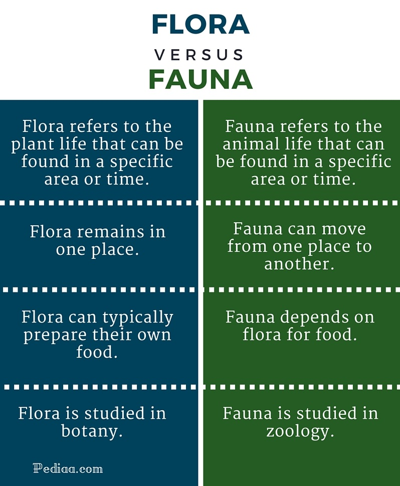 Difference Between Flora and Fauna - infographic