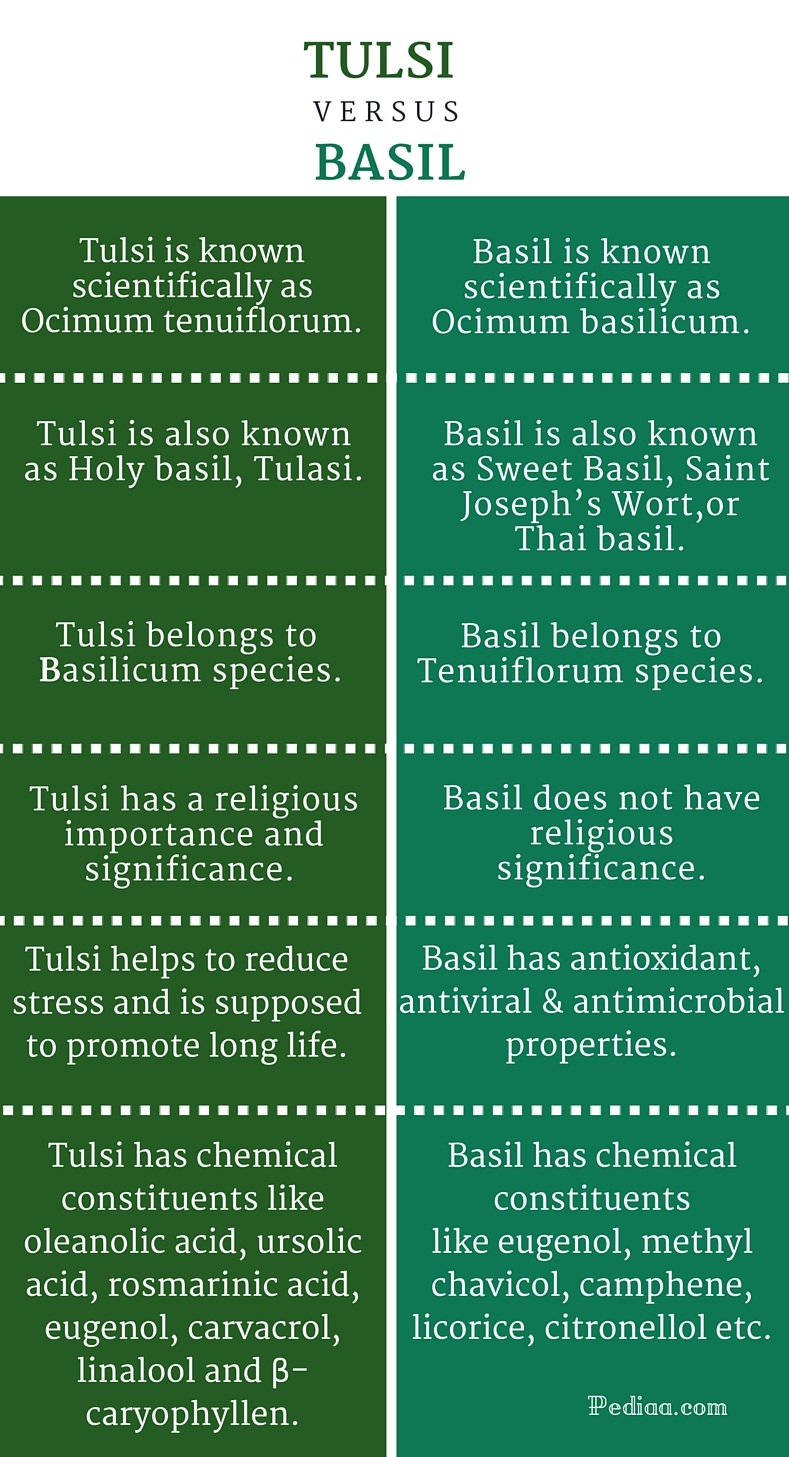 Difference Between Tulsi and Basil - infographic