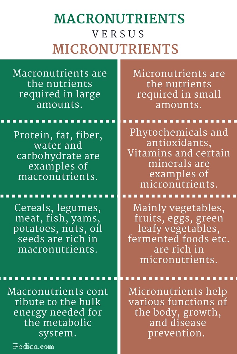 Difference Between Macronutrients and Micronutrients - infographic