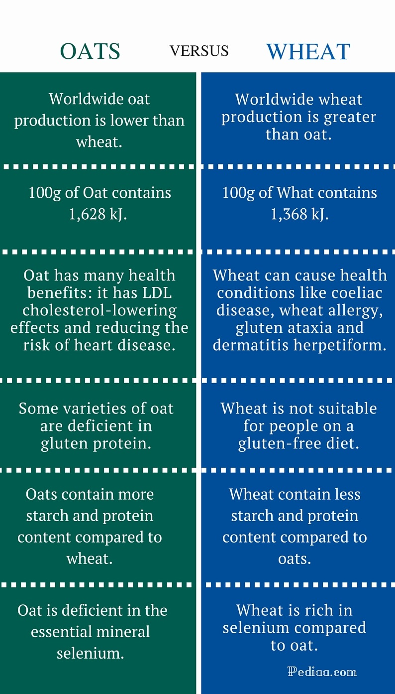 Difference Between Oats and Wheat - infographic
