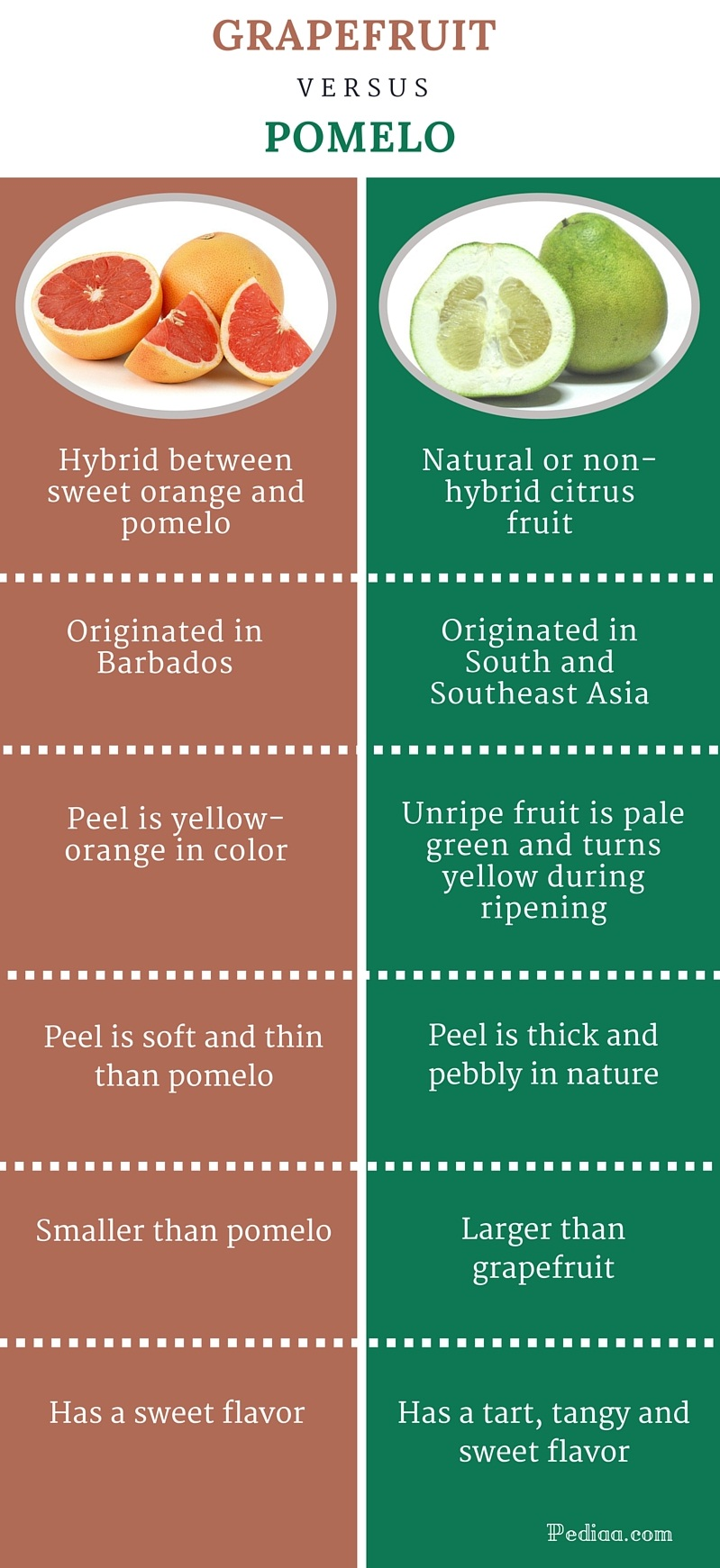 Difference Between Grapefruit and Pomelo-infographic