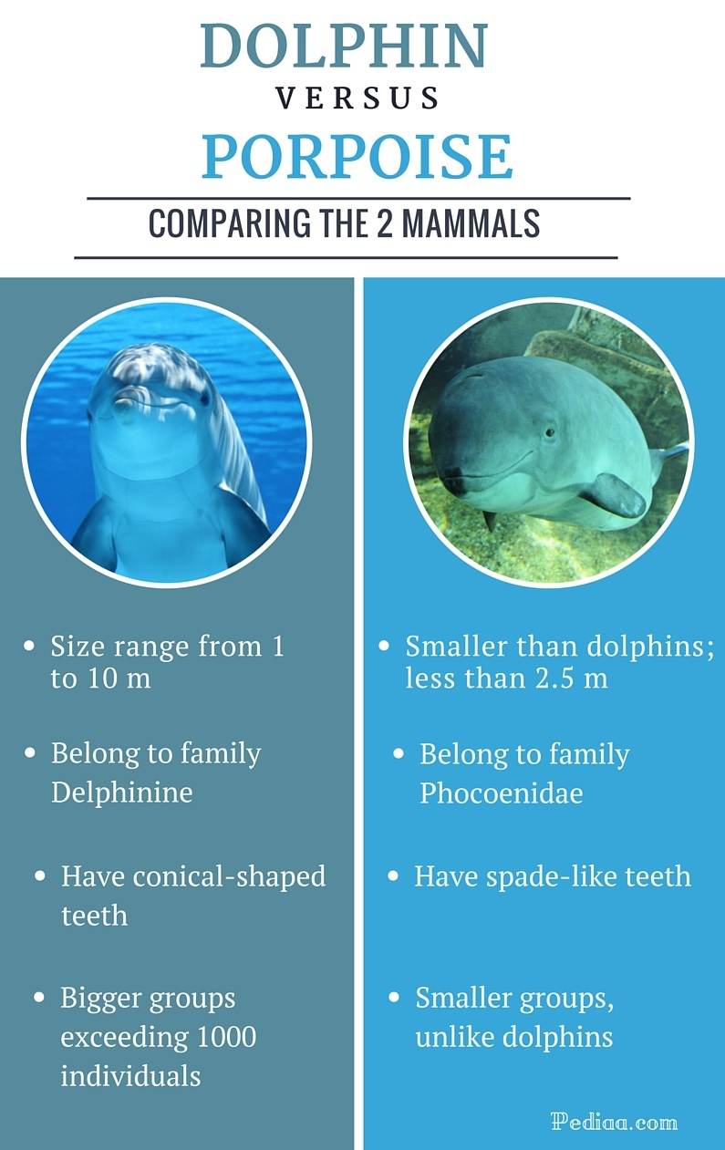 the diffrences between dolphins and porpoises Many people mistakenly believe that a dolphin is a porpoise differences between the two both dolphins dolphins and porpoises have some differences.