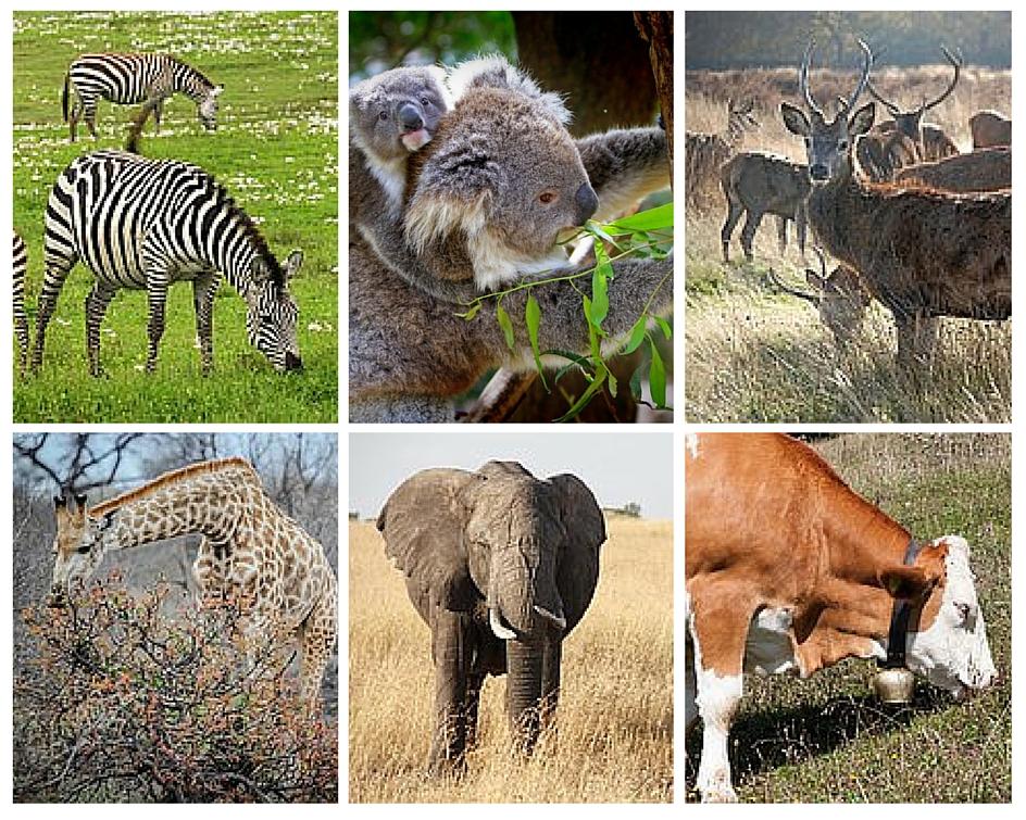 Difference Between Herbivores Carnivores and Omnivores - 1