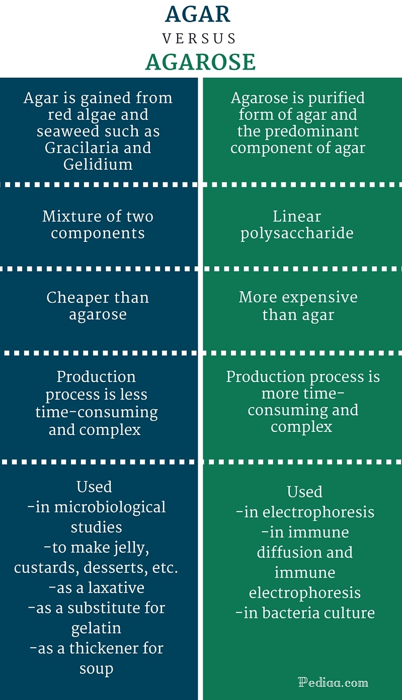 Difference Between Agar and Agarose -infographic