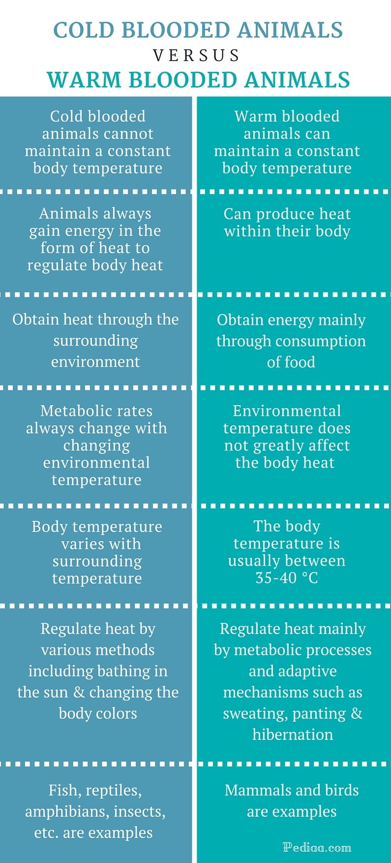 Difference Between Cold Blooded and Warm Blooded Animals - infographic