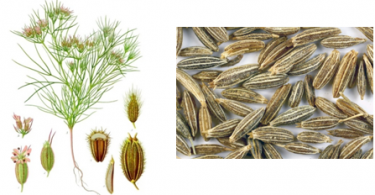 Difference Between Cumin and Fennel