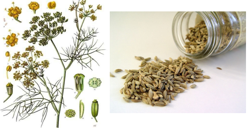 Main Difference - Cumin vs Fennel