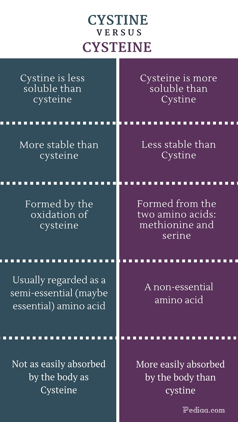 Difference Between Cystine and Cysteine - infographic