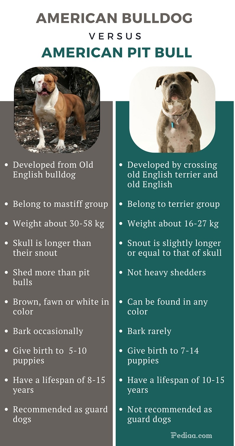 Difference between American Bulldog and Pit Bull - infographic