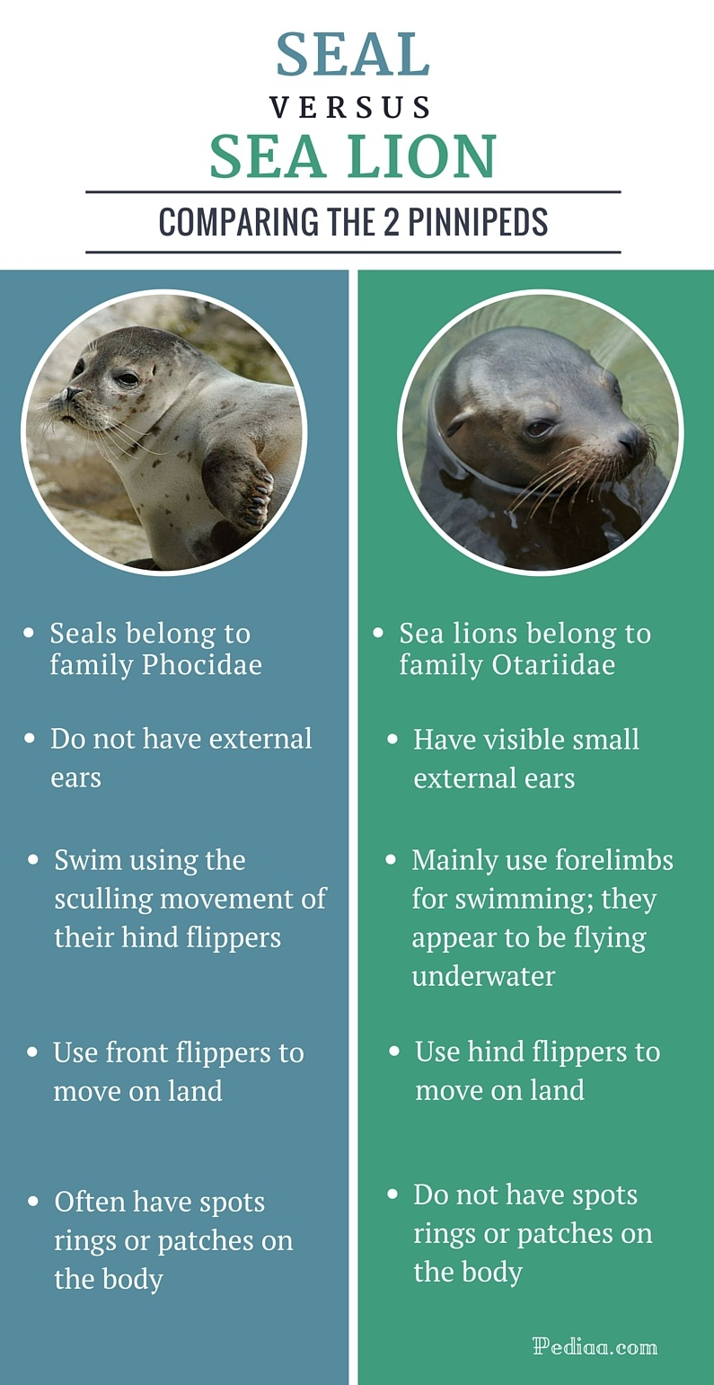 Difference between Seal and Sea Lion - infographic