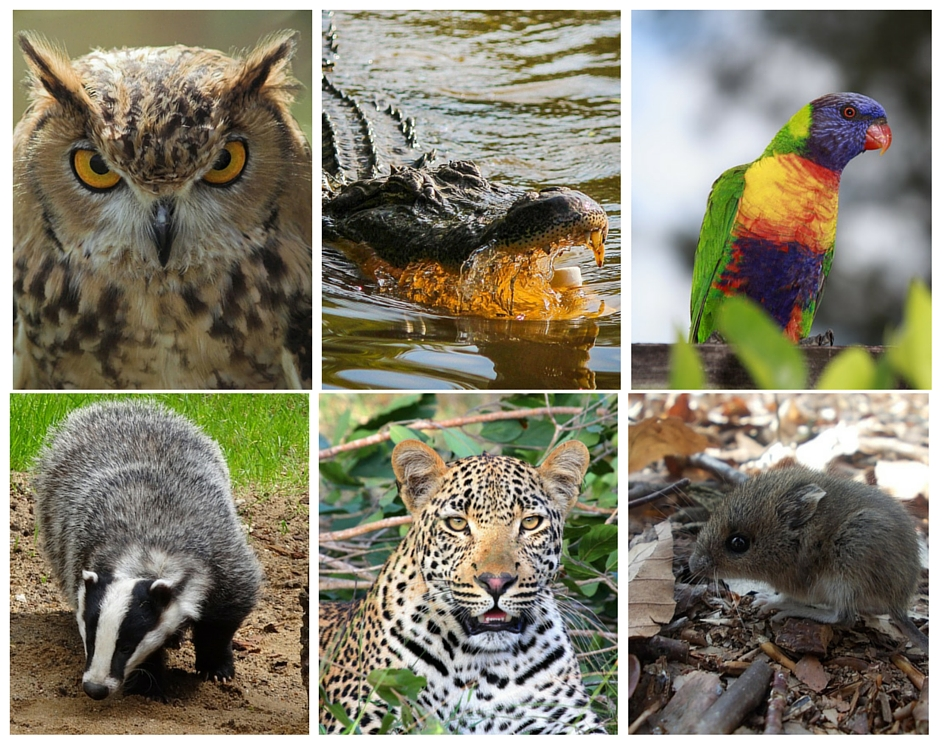 Difference Between Nocturnal and Diurnal Animals