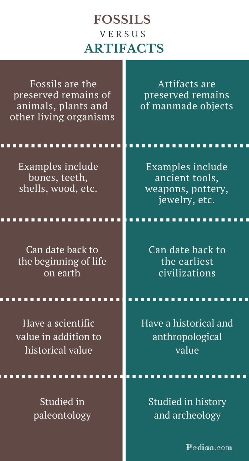 Difference Between Fossils and Artifacts - Fossils vs Artifacts Comparison Summary
