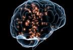 How Do Neurotransmitters Influence Behavior
