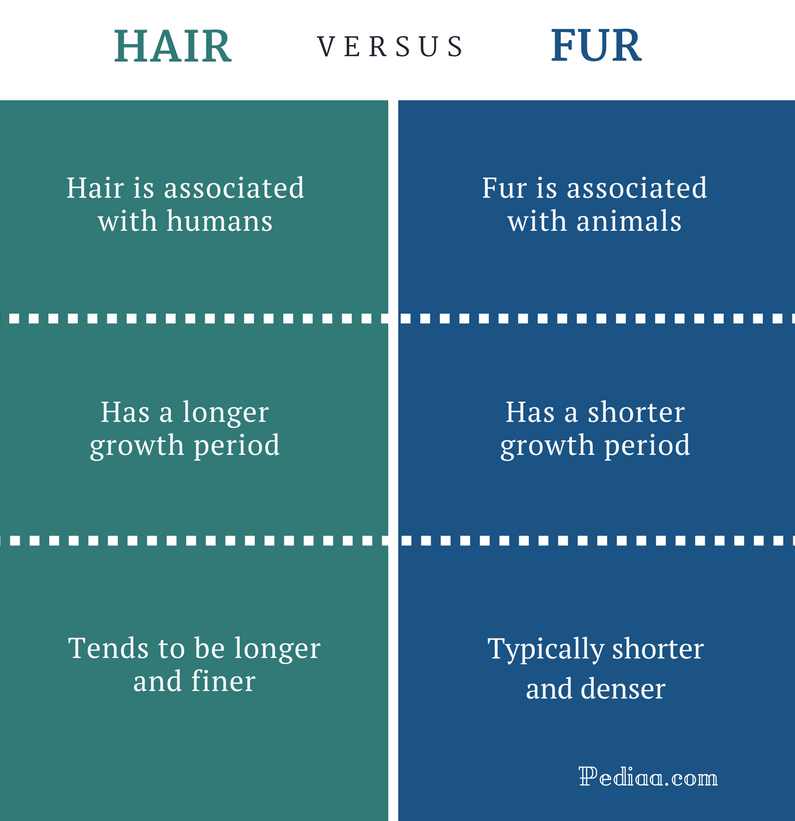Difference Between Hair and Fur - Hair vs Fur Comparison Summary