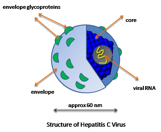 Main Difference - Hepatitis A B C vs D