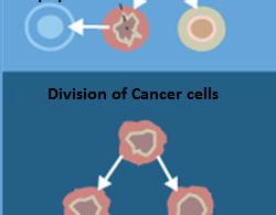 How Do Cancer Cells Develop  - 1