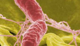 Difference Between Salmonella Typhi and Paratyphi