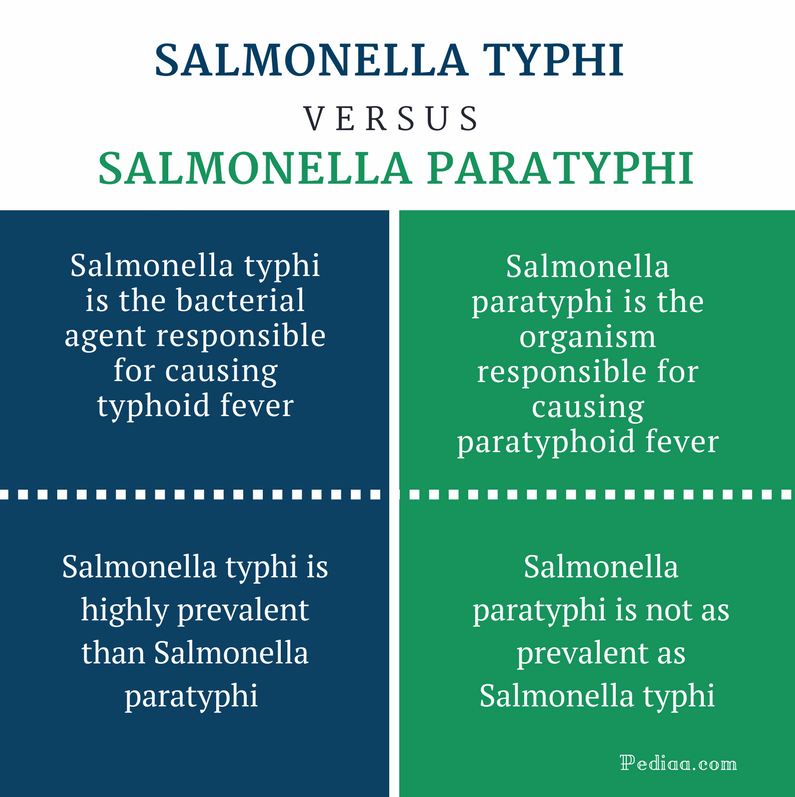 Difference Between Salmonella Typhi and Paratyphi - Comparison Summary