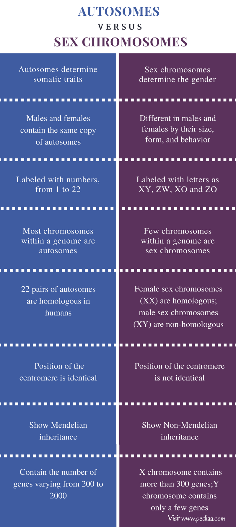 Difference Between Autosomes and Sex Chromosomes - Comparison Summary