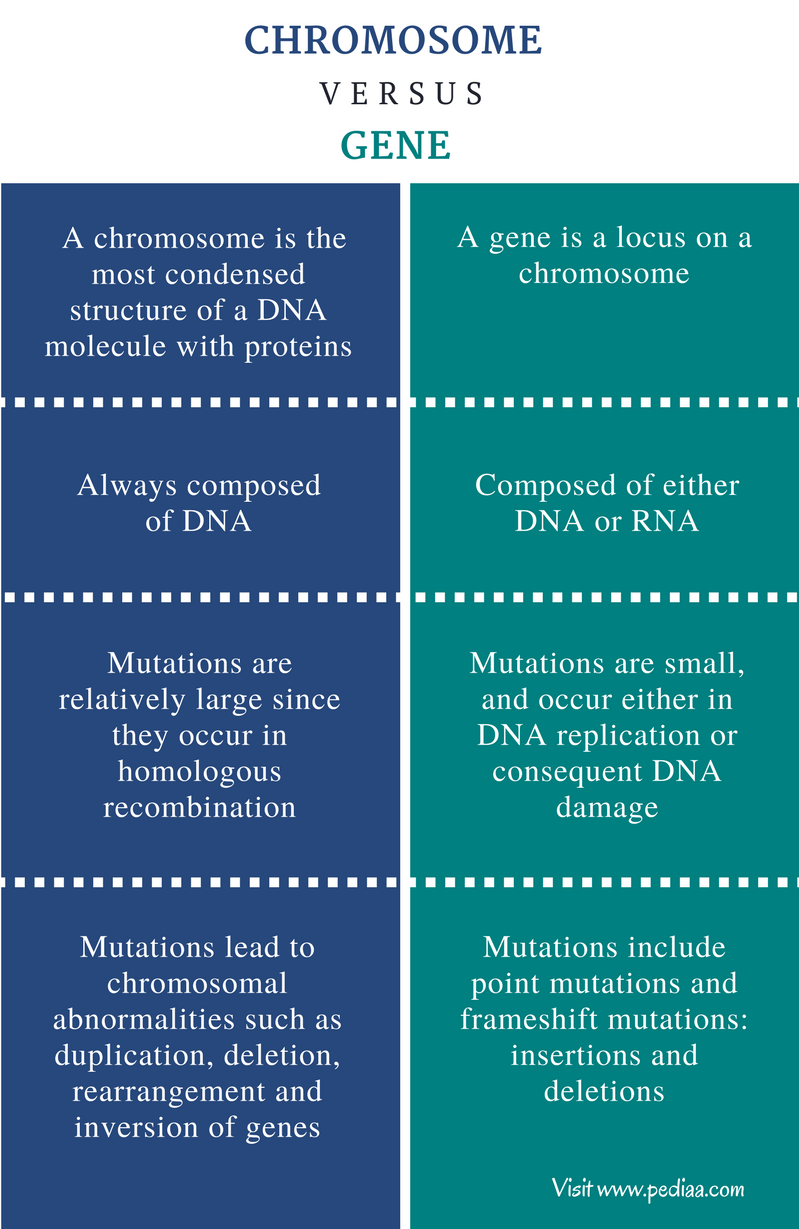 Difference Between Chromosome and Gene - Comparison Summary