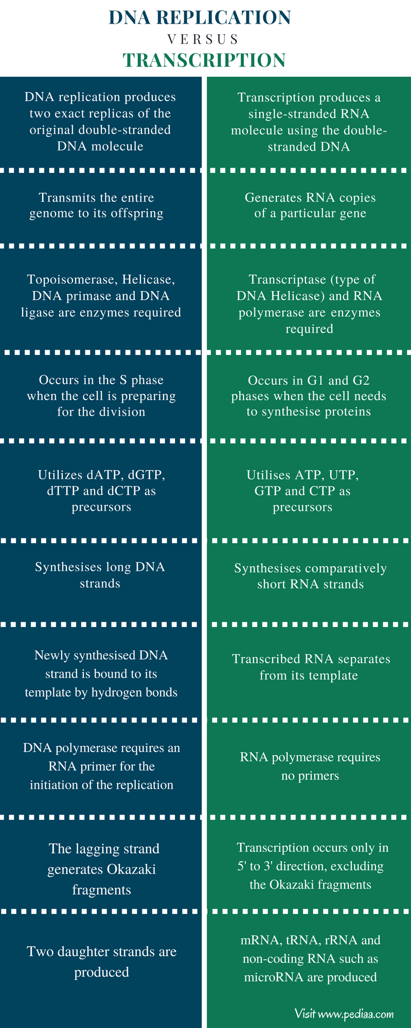 Difference Between DNA Replication vs Transcription - Comparison Summary