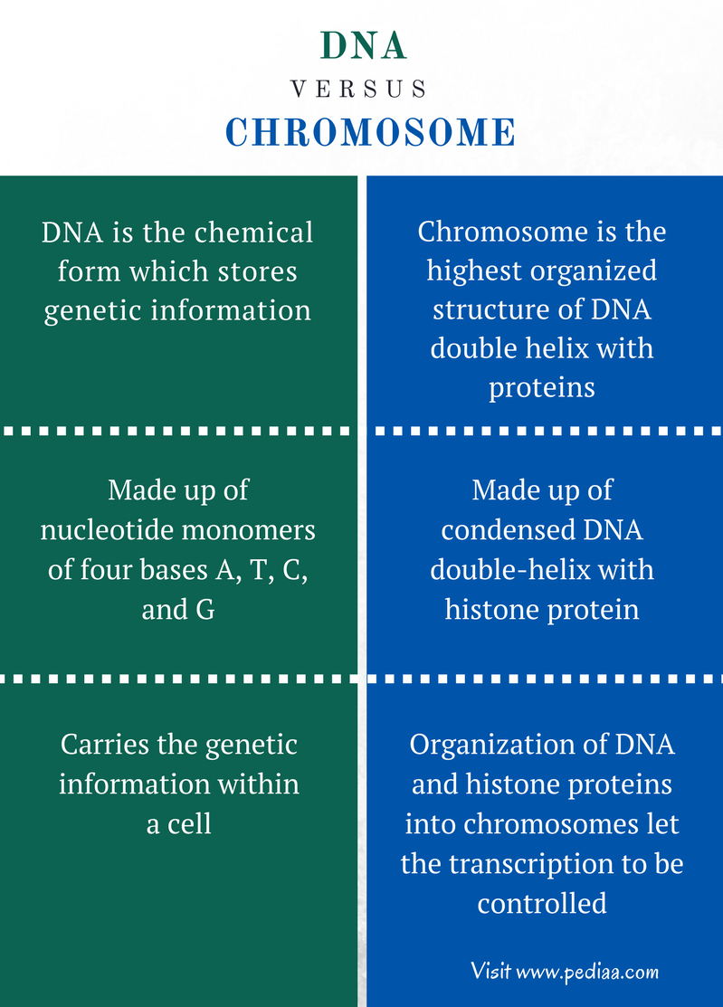 Difference Between DNA and Chromosome - Comparison Summary