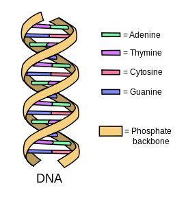 Difference Between DNA and Genes