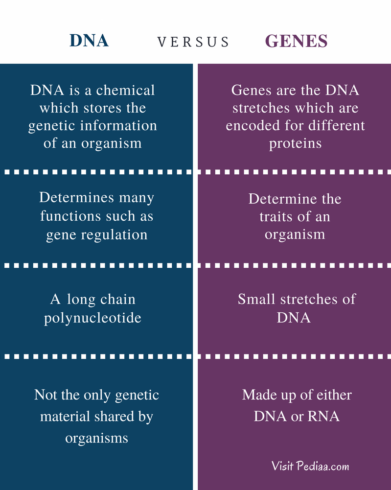 Difference between dna and genes definition structure features difference between dna and genes comparison summary malvernweather Choice Image